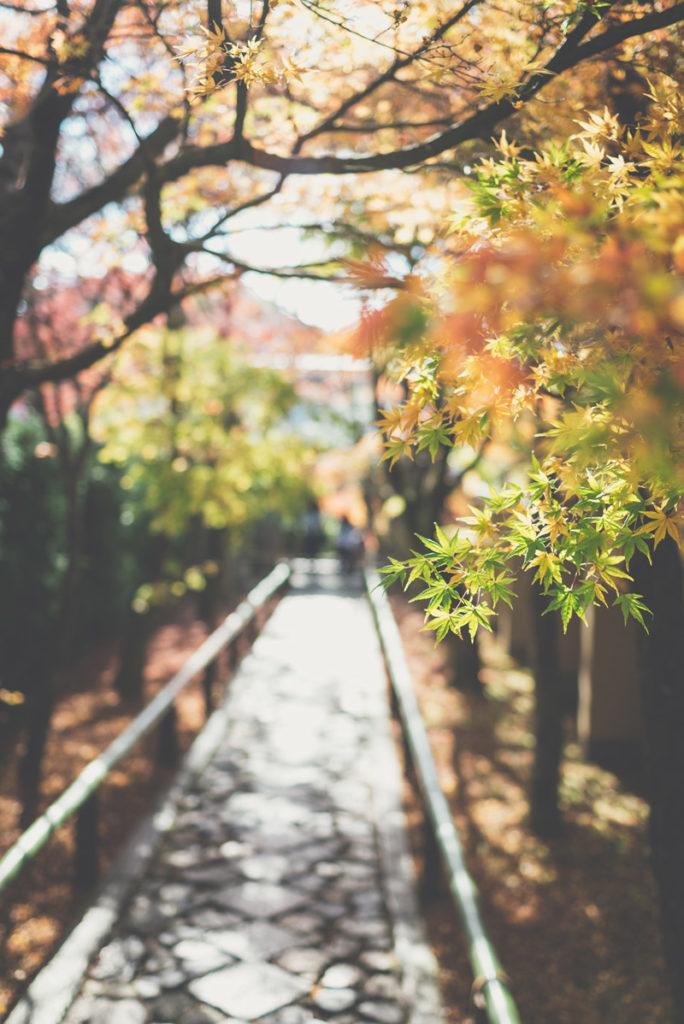 Otoño en Japón Ikigai 4