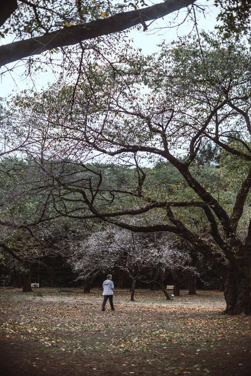 Clima en Japón Ikigai 10