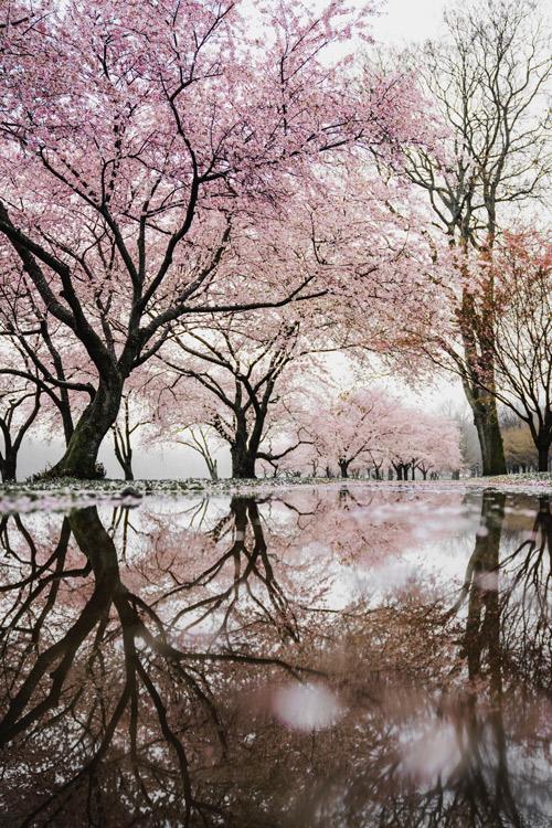 Clima en Japón Ikigai 2